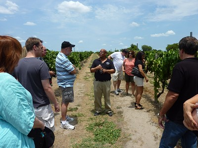 Messina Hof private tasting - vineyard