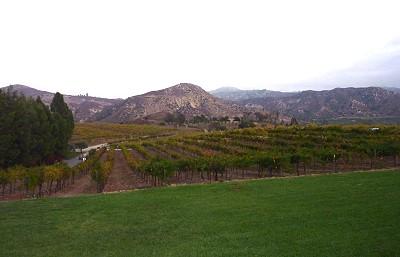 Orfila - vineyards