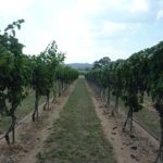 Free Vineyard Tours at Perissos Vineyard and Winery