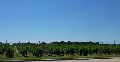 Delaney - vineyards