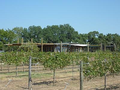 Solaro - vineyards