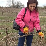Bernhardt Winery Pruning