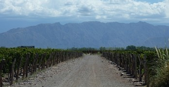 Ruca Malén vineyard