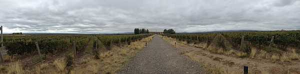 Salentein - winery and vineyard