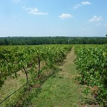 Texas Hill Country Wineries adds Statewide Grower Members