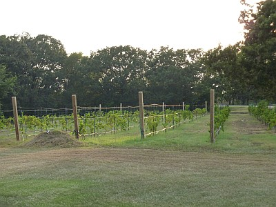 Crump Valley - vineyard
