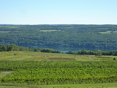 Heron Hill - view from winery