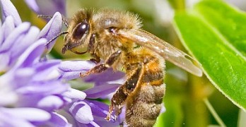 Help the Honeybees!
