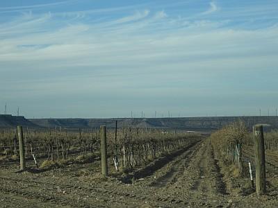 Ste. Genevieve - vineyard