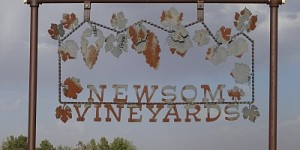 grapeday-newsomvineyards