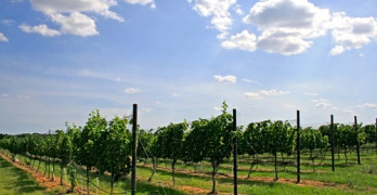 Pedernales Cellars' Kuhlken Vineyard Tempranillo in the Texas Hill Country AVA