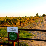 Lodi wines compared to Texas wines, hats, and cattle