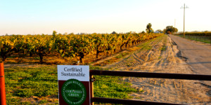 Over 20,000 acres in the Lodi AVA are Lodi Rules certified; such as Dave Devine's pristinely cultivated LDL Vineyards Zinfandel, located on the gentle slopes of Lodi's Clements Hills AVA