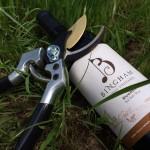 Review of Bingham Family Vineyards Dugout