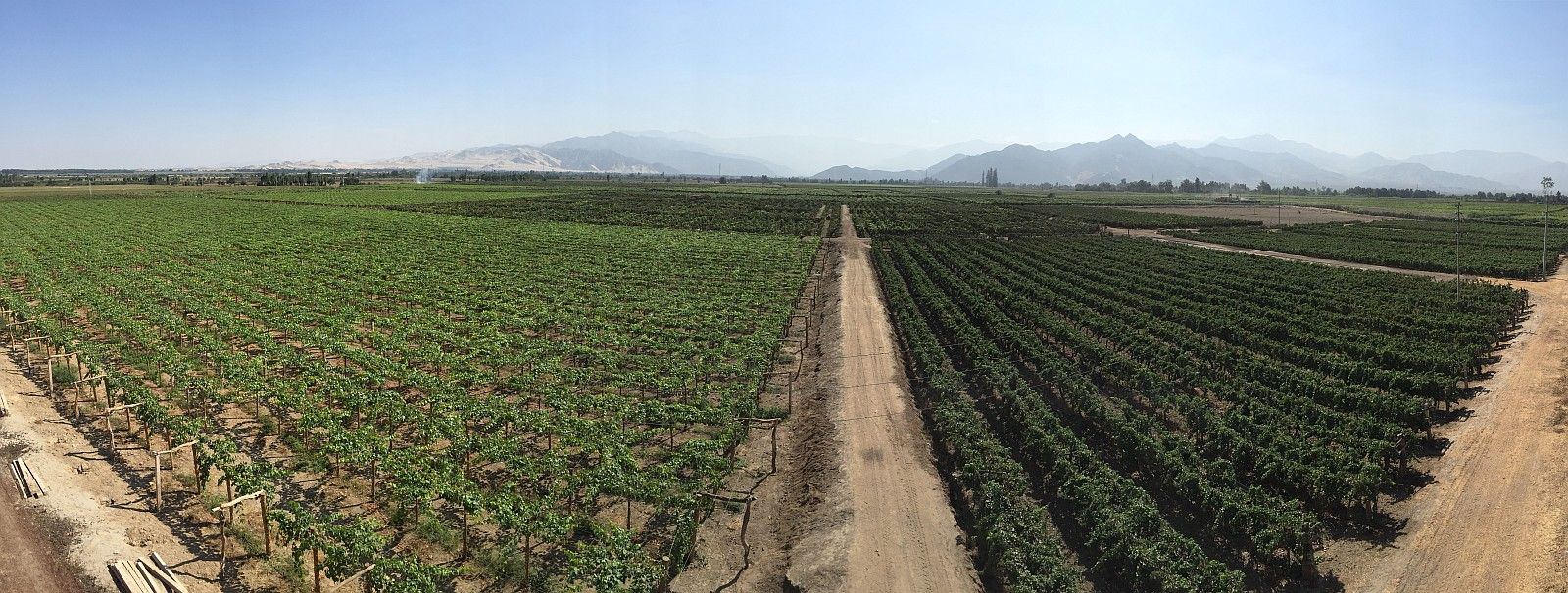 Vineyards at Tacama with Andes mountains in the background