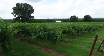 New Texas Vineyards List available with Search and More!