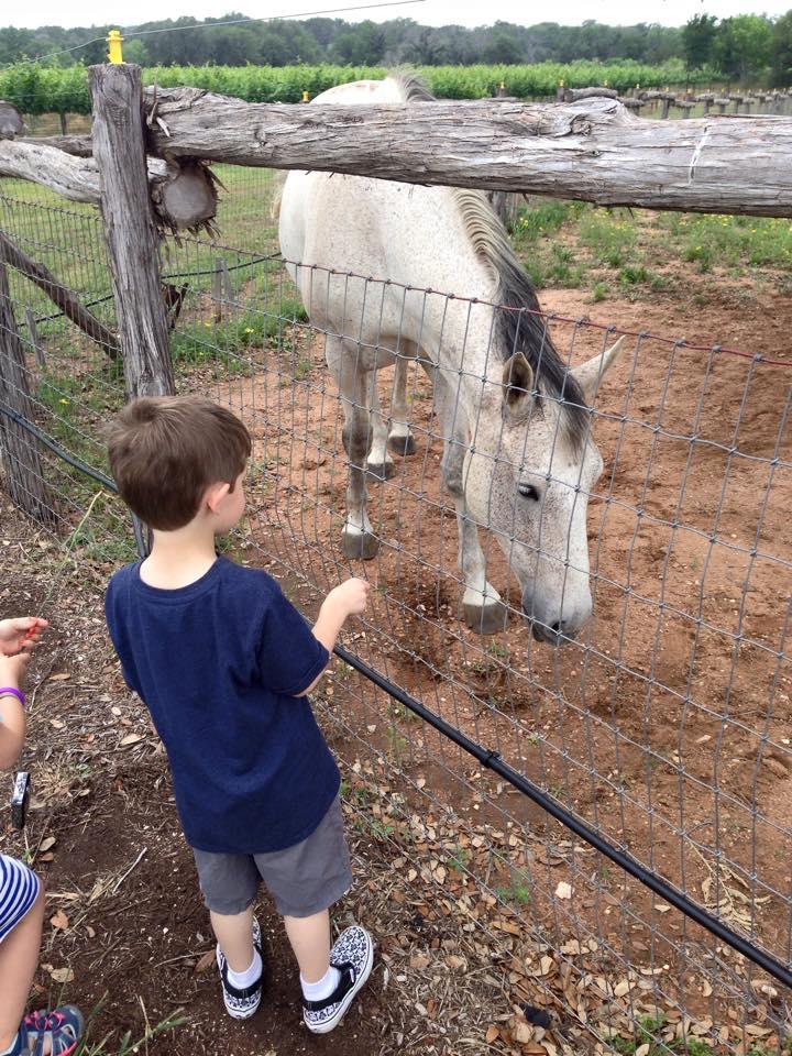 Feeding horses at Perissos