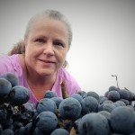 Wedding Oak Winery 2015 Harvest Report