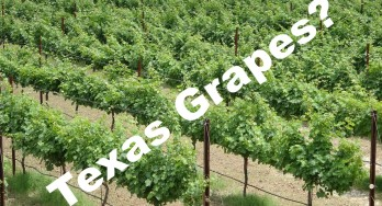 Does Texas even Grow Grapes?