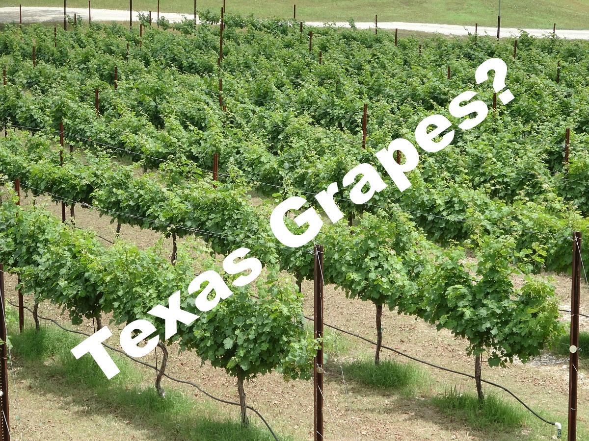 Texas Grapes?