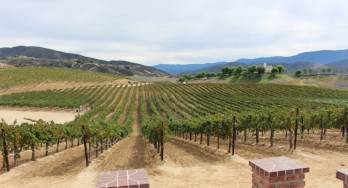 Vineyards of Leoness Cellars
