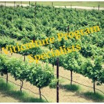 Viticulture Program Specialists again in Texas