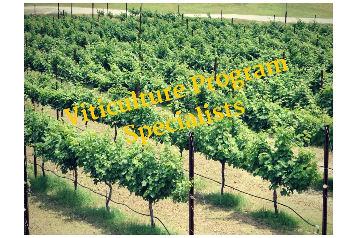 Viticulture Program Specialists