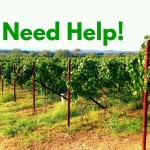 Businesses that can Help Wineries and Vineyards