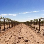 Texas Terroir – Embrace the Diversity