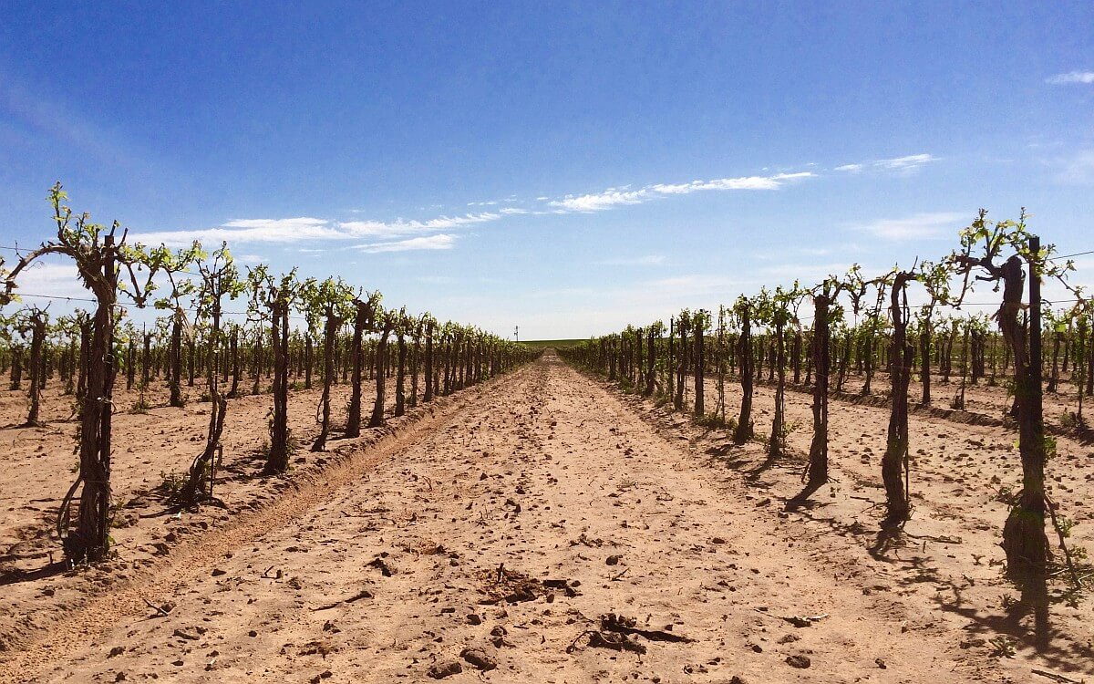Newsom Vineyard in the High Plains