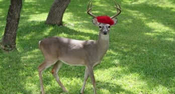 Texas deer with beret