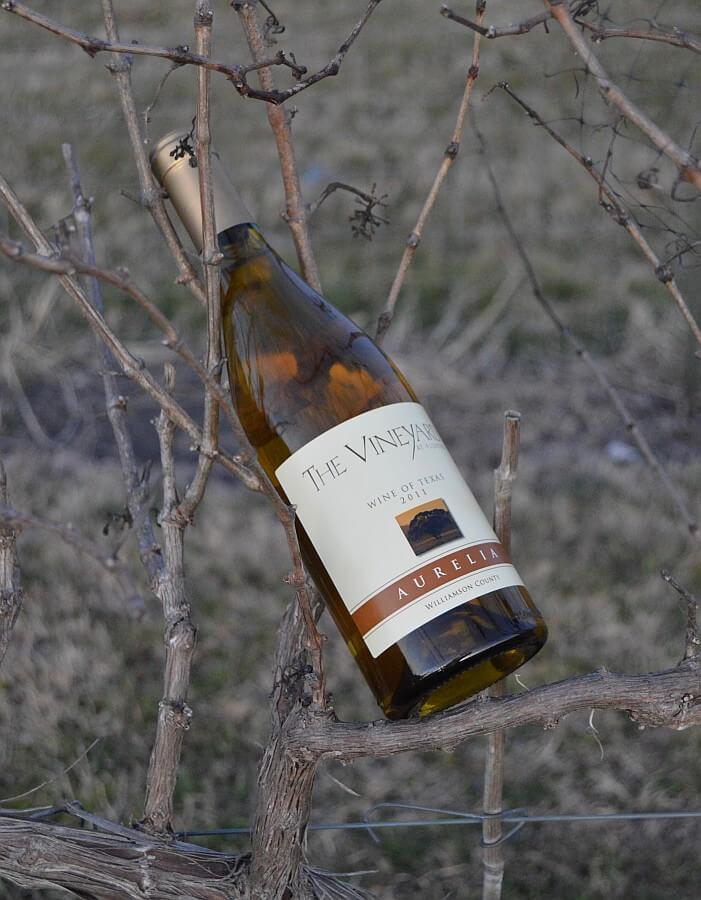 Vineyard at Florence front Aurelia nestling in Cabernet vine
