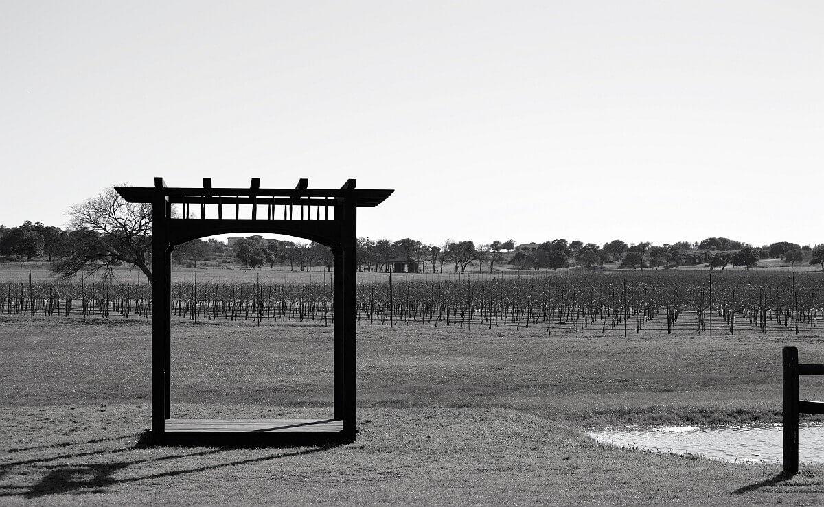 Vineyard at Florence alter