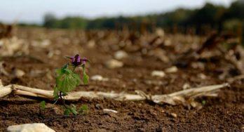 Dirt Can Make Wine Better