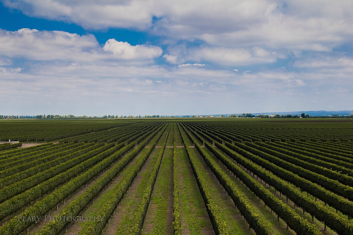 Septima Obra vineyard - Photo by: Peary Photography
