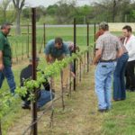 Want to Learn How to Grow Grapes?