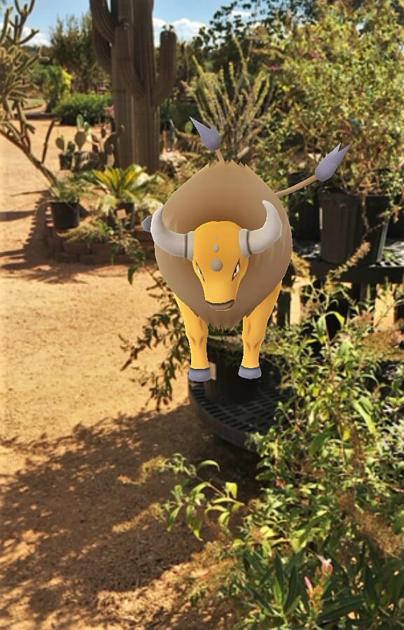 Pokemon at Wildseed Farms