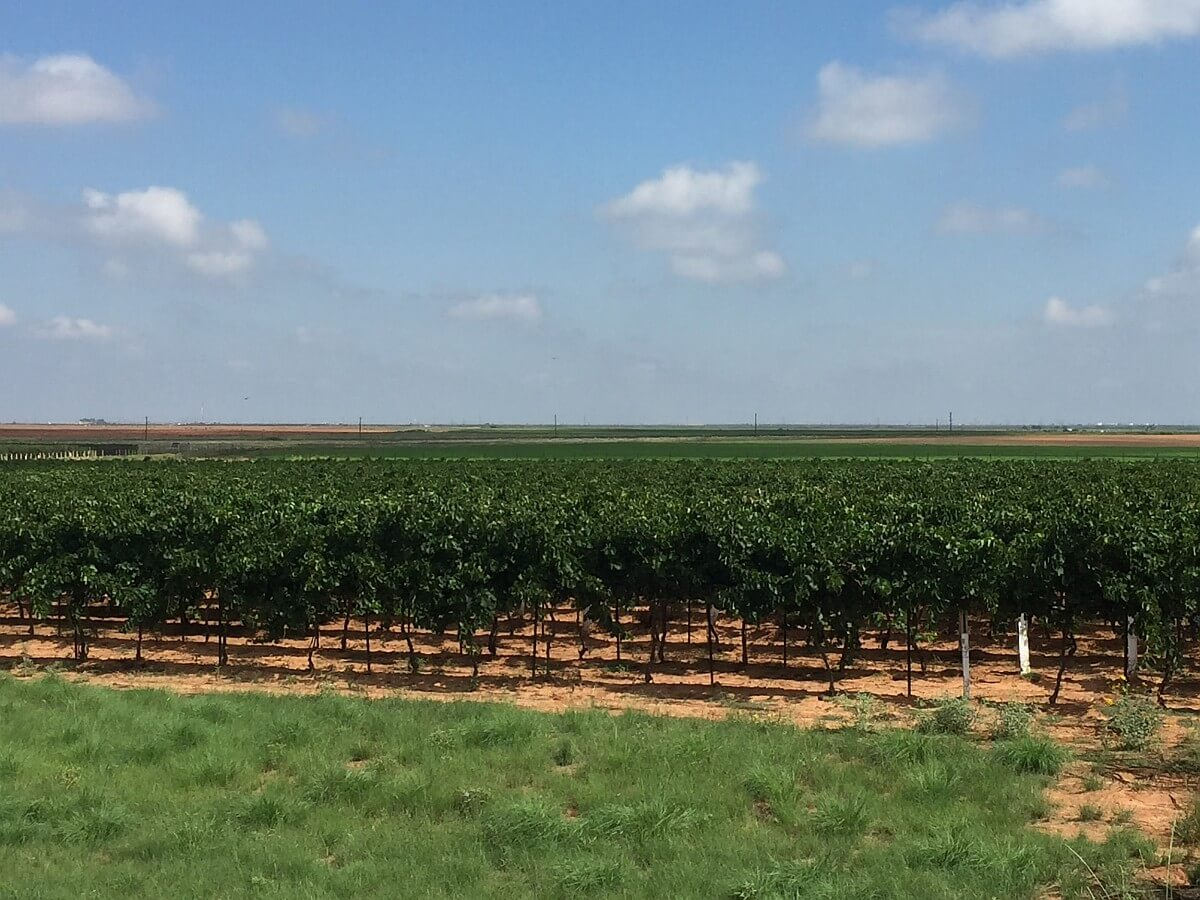 Texas Artisan Vineyards Cooperative of the High Plains | Texas ...
