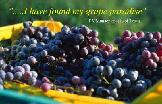 T.V. Munson quote