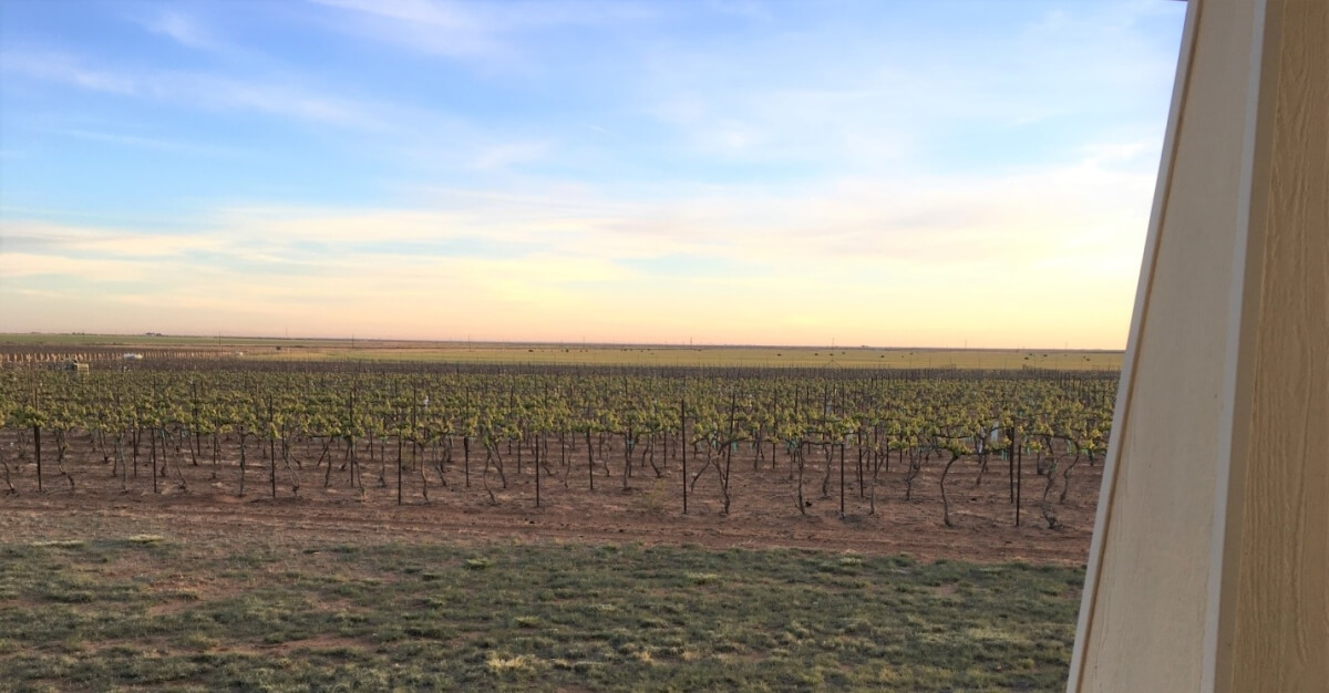 Buena Suerte Vineyards – a view from the Day's side porch
