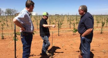 Jeremy Nelson pointing out young vines in his Soleado Vineyards in Seagraves to Shelly Ware & Carl Hudson