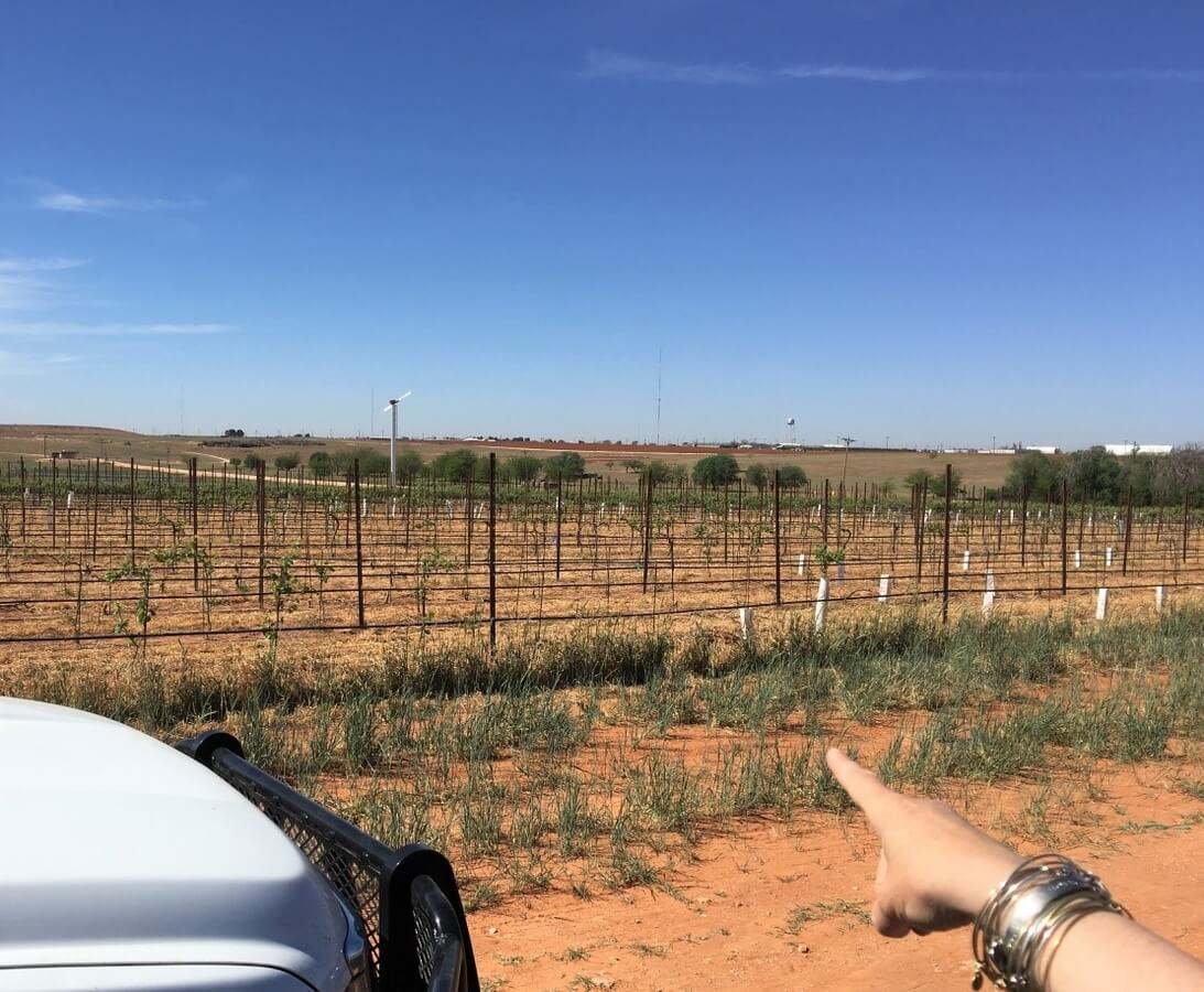 Katy Jane Seaton pointing out the unexpected background for the third Farmhouse Vineyards site just outside Brownfield