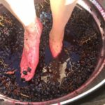 Grape Stomping in Texas 2019