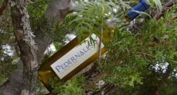 Pedernales Cellars Texas Roussanne bottle