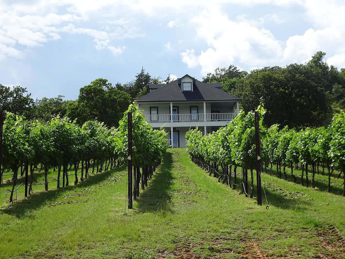 4R Ranch vineyard