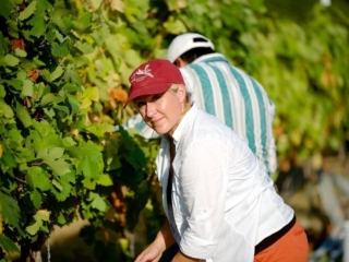 Harvest volunteer at Hawk's Shadow