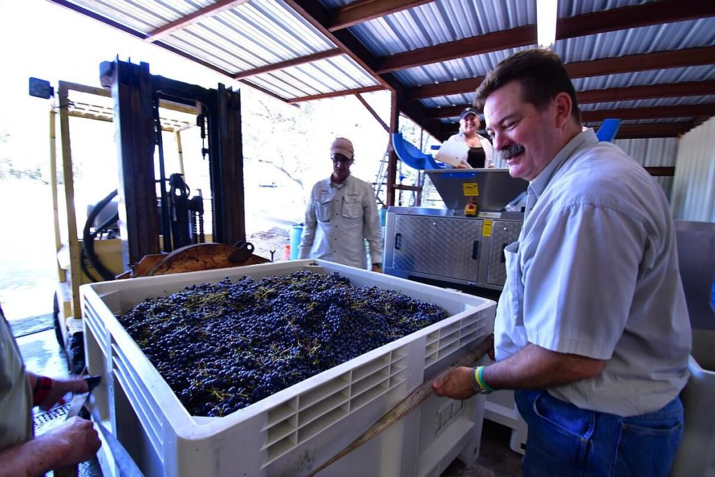 Chip Concklin securing the grape harvest to the forklift for a gravity-fed delivery to the destemmer