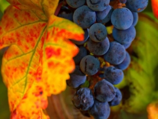 Colors of a Hill Country Harvest