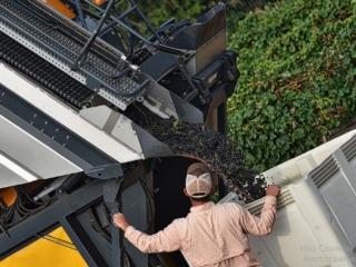 Pellenc Harvester discharging bounty from the Hye Estate Vineyard at William Chris