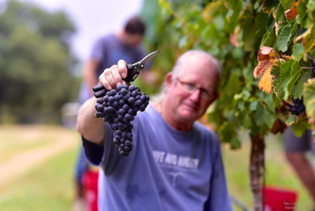 Bill Blackmon holding young vine Malbec at William Chris Vineyards